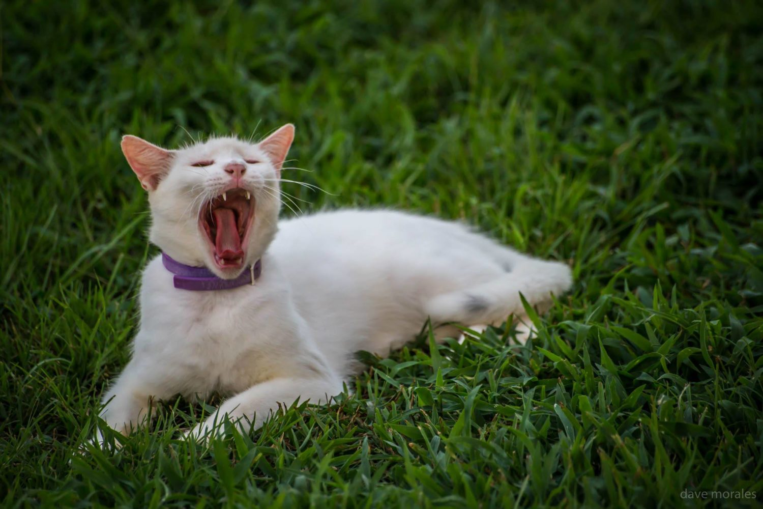 Hear Cat Roar